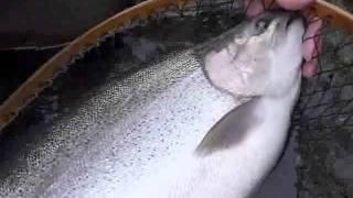 北海道で70オーバーのニジマスが釣れたでござるの巻