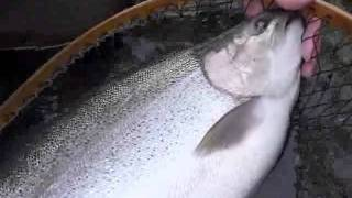 getlinkyoutube.com-北海道で70オーバーのニジマスが釣れたでござるの巻