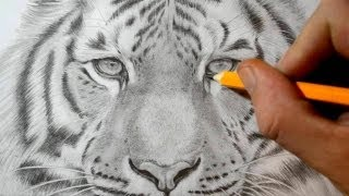 getlinkyoutube.com-How to Draw a Tiger - Realistic Pencil Drawing