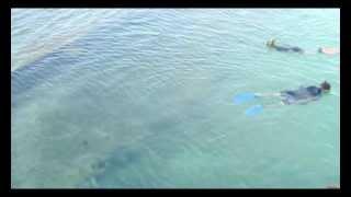 getlinkyoutube.com-Watching sharks feeding from Heron Island jetty