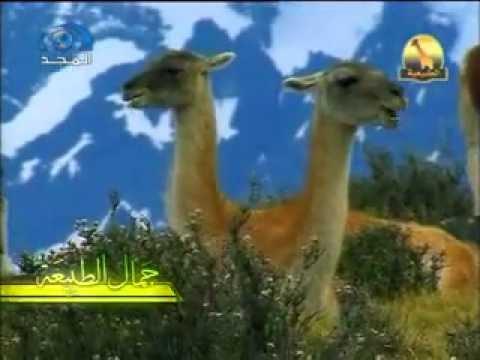 حيوانات متنوعة   جمال الطبيعة