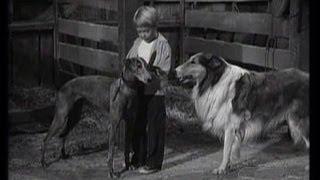 Lassie   Episode 124