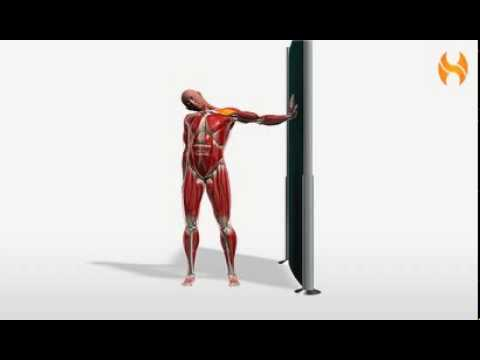 Exercise Videos- Wall Nerve Stretch