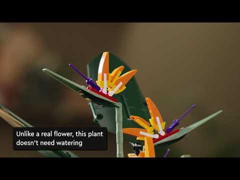 LEGO Creator Expert  Icons Bird of Paradise - 10289