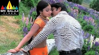 getlinkyoutube.com-Nenunnanu Songs | Neekosam Neekosam Video Song | Nagarjuna, Aarti Aggarwal | Sri Balaji Video