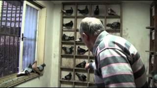 getlinkyoutube.com-Golubarske price - Slobodan Boskovic