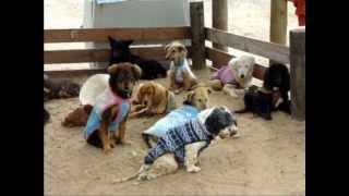 El silencio de los perros que viven en un refugio