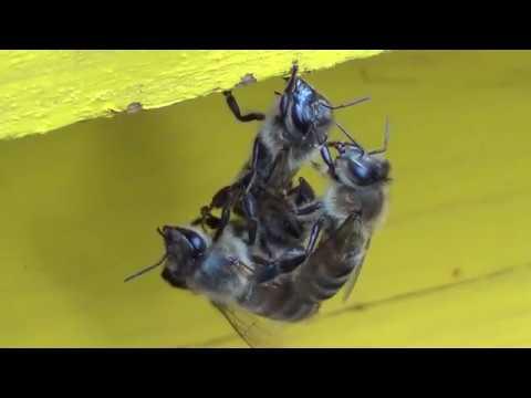 Priroda pčeli snagu daje