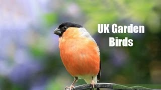 getlinkyoutube.com-My UK Wildlife Garden Birds