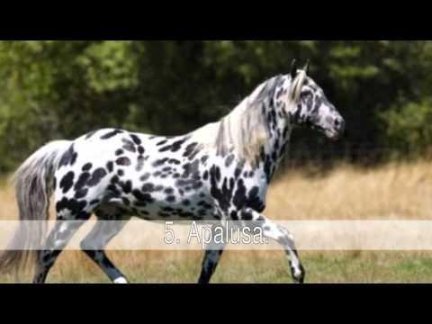 Las mejores razas de caballos de todo el mundo