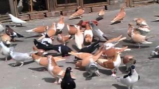 Abu-Nabil Shirazi kabotar 28-03-12.3gp