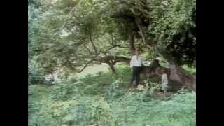 getlinkyoutube.com-FILME MEU PÉ DE LARANJA LIMA 1969 (Completo)