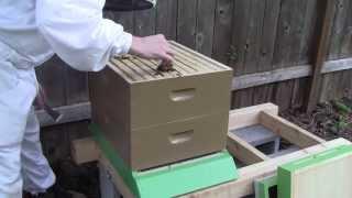 getlinkyoutube.com-Bee Vlog #86 - April 8, 2013 - Release Queen Catherine