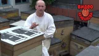 getlinkyoutube.com-Условия быстрого развития пчелосемьи