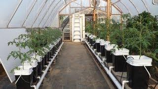 getlinkyoutube.com-Hydroponic Update ~ Dutch Bucket Tomatoes and Kratky Lettuce
