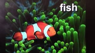 getlinkyoutube.com-Sea Animals from Baby Einstein:World Animals.