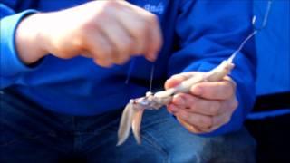 getlinkyoutube.com-How to bait up a whole squid bait