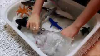 getlinkyoutube.com-sharks kid toy aquarium