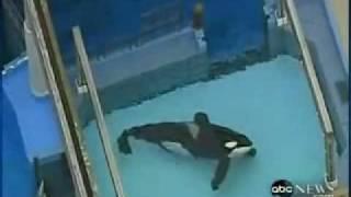 getlinkyoutube.com-Shamu kills trainer 2010 video