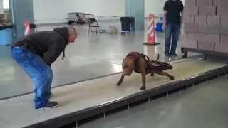 getlinkyoutube.com-Utah Working Dogs pull over 5000 pounds!!