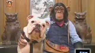 getlinkyoutube.com-ขำกลิ้งลิงกับหมา (V.9 Full) ตอน ปฎิบัติภารกิจบนเกาะแดนใต้