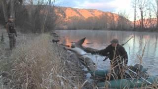 getlinkyoutube.com-Small Pond Waterfowl
