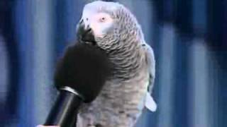 Amazing parrot imitating many sounds
