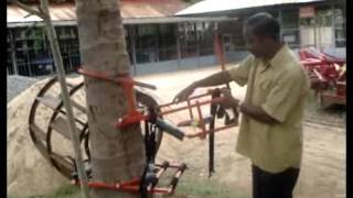 getlinkyoutube.com-Coconut Tree Climber
