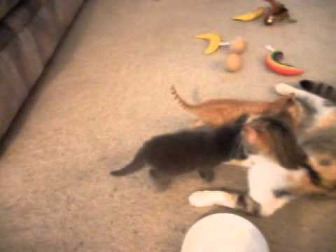 five kittens for youtube 053113 003
