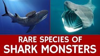 10 Rare Sharks, Endangered Species and Extinct Prehistoric Marine Monsters width=
