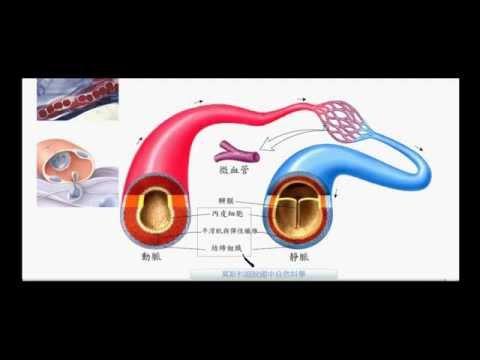 國一生物_血管的比較_動脈_靜脈_微血管【莫斯利國中自然科學】【國中生物】 - YouTube