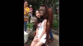 Orangutan enjoyed kissing and hugging a girl
