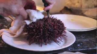 getlinkyoutube.com-How to make Uni Sashimi (Sea Urchin)