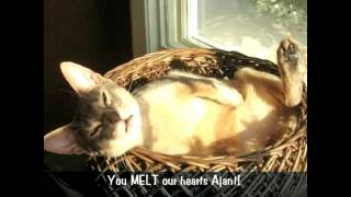 3 Legged Kitten, Incredible Journey! Inspirational