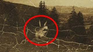 getlinkyoutube.com-5 Most Mysterious Prehistoric Animals Spotted Alive Today