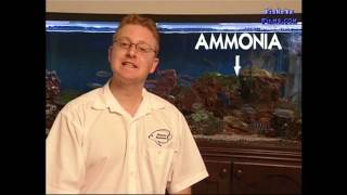 getlinkyoutube.com-important for CICHLID WATER QUALITY