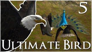 getlinkyoutube.com-Pestering the Peacock Queen!! • Ultimate Bird Simulator - Episode #5
