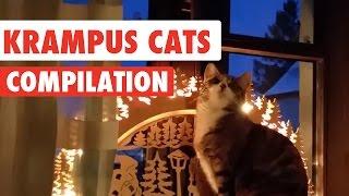getlinkyoutube.com-Krampus Cats Video Compilation 2016