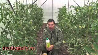 getlinkyoutube.com-Применение ЭМ препаратов при обработке томатов
