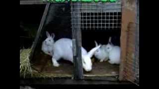 getlinkyoutube.com-Домашние кролики  Малышева