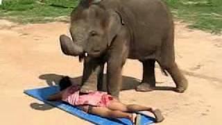 getlinkyoutube.com-Thai Elephant Massage - by a Cute Baby Elephant in Koh Samui