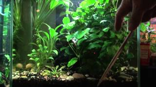 getlinkyoutube.com-Aquarium Plants for Beginners