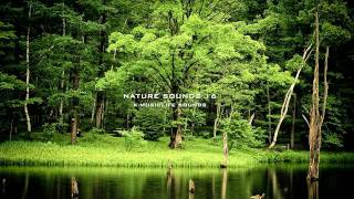 getlinkyoutube.com-Nature Sound 16 - THE MOST RELAXING SOUNDS -