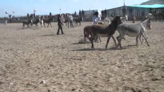 Rodeo de Burros  Carrizalillo