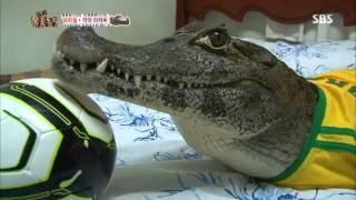 TV동물농장 130825 다시보기 #1(12)