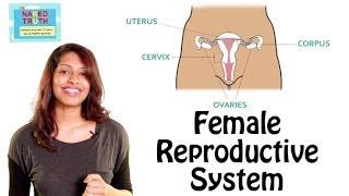 getlinkyoutube.com-Female Reproductive System 101 in Hindi