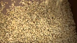 Roasted Peanut Peeling Machine Video SEJAL ENETRPRISES PUNE