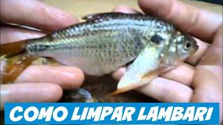 getlinkyoutube.com-Como limpar Lambaris com extrema rapidez