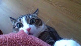 getlinkyoutube.com-Funny Stalking Cat Video Compilation 2013
