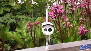 getlinkyoutube.com-Foscam FI9803P Outdoor Security Camera Review